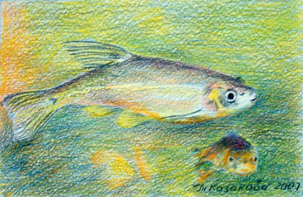 Татьяна Казакова. Рыбки