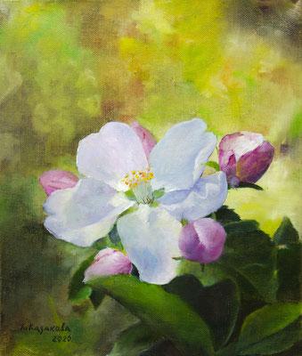 Татьяна Казакова. Яблоня цветёт.