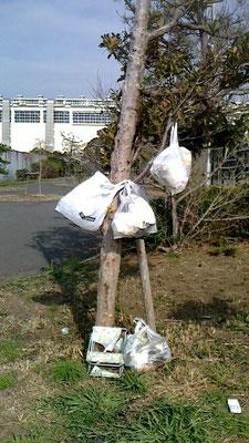 僕はゴミの木ではありません!