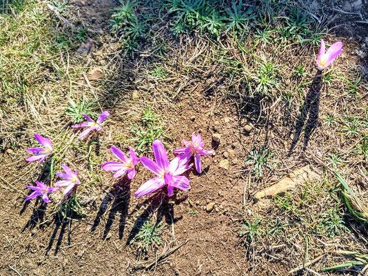 beim Spaziergang in der Umgebung sehen wir diese Blumen auf dem Weg