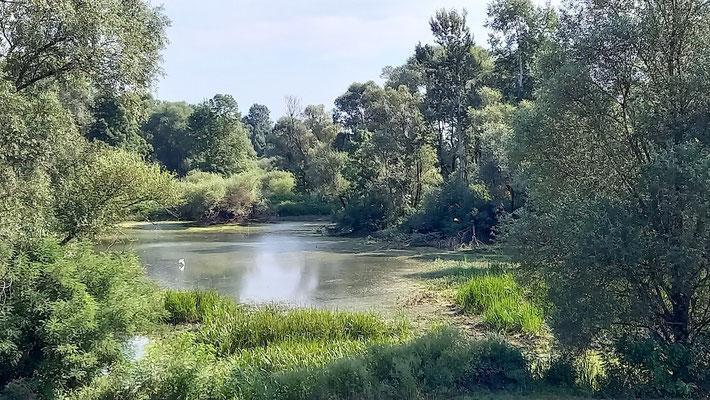das Feuchtgebiet des Naturparks Lonjsko Polje wird gebildet aus dem Fluss Sava und unzähligen toten, d.h. abgeschnittenen Flussläufen