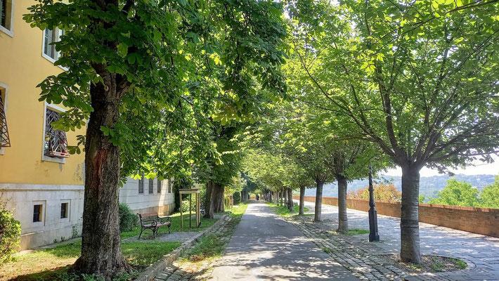 schattiger Rundgang entlang der ganz normalen Rückseite der Wohnhäuser mit ganz normalen Menschen drin