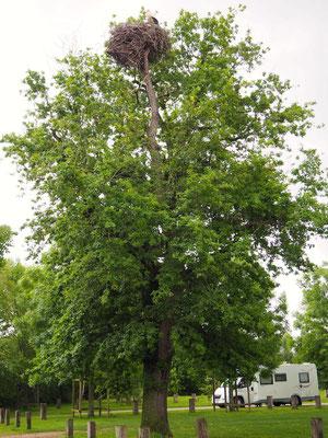 Baum mit Storchennest auf dem Parkplatz