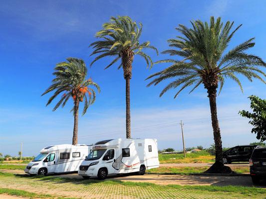 Parkplatz unter Palmen