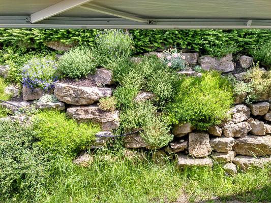 das Grün vor unserer Haustür