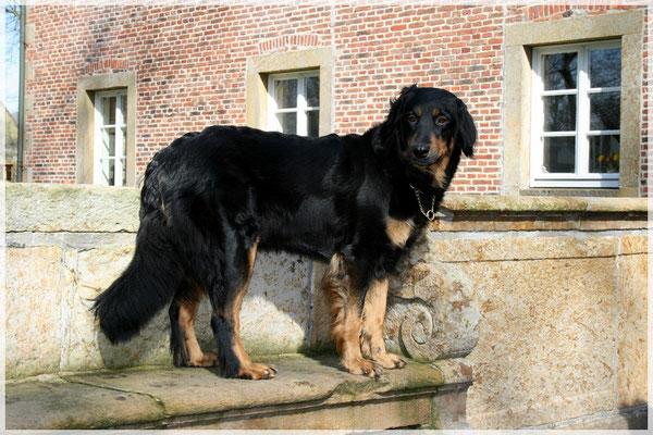Cinderella us de Küpp, März 2008