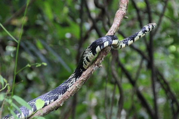 Chanceux avec les serpents au Costa Rica :)