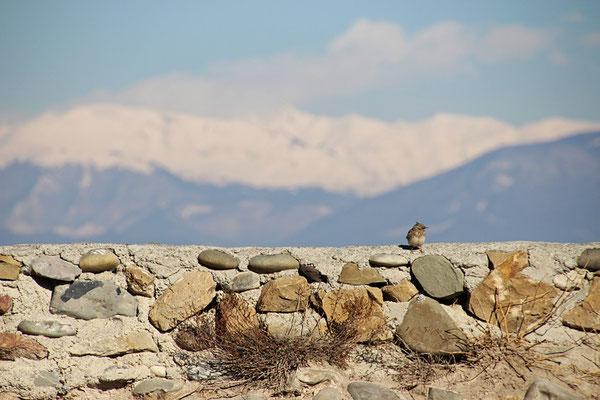Gori, forteresse, devant le Caucase
