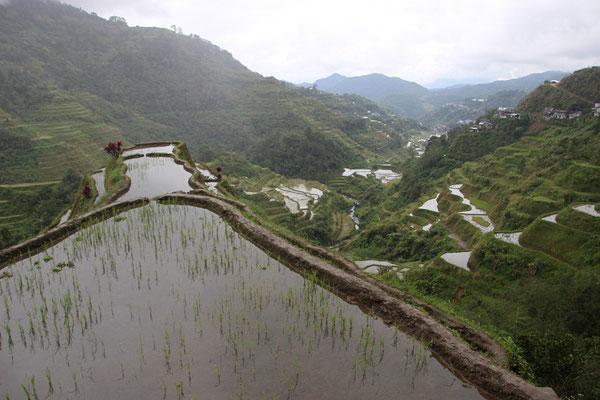 Rizière Banaue
