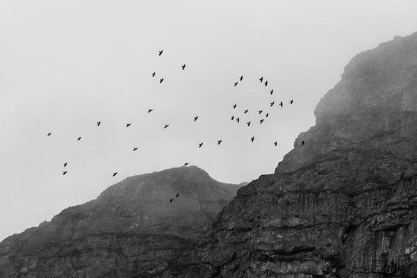 Vögel des Mount Doom (nicht dass ich an die Unglücksbedeutung von Rabenvögeln glaube)