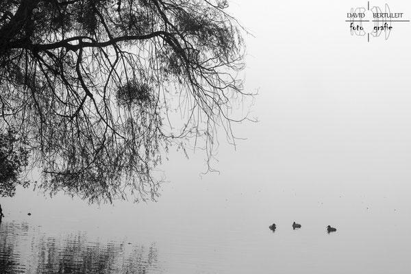 Herbstmorgen (50mm)