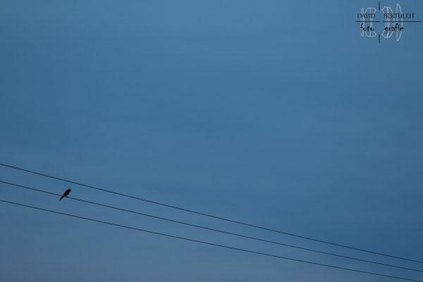 Last bird standing (200mm)