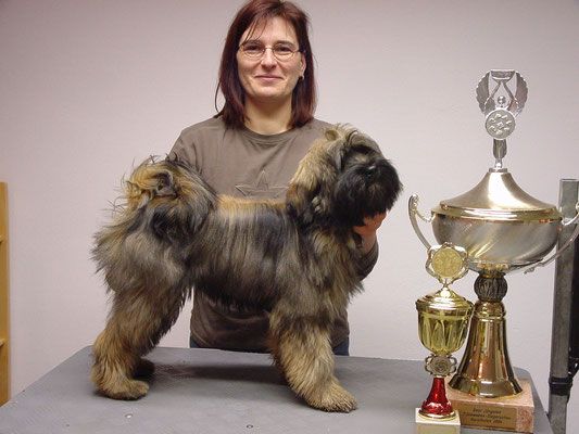 Junger Tibet Terrier mit stolzem Frauchen