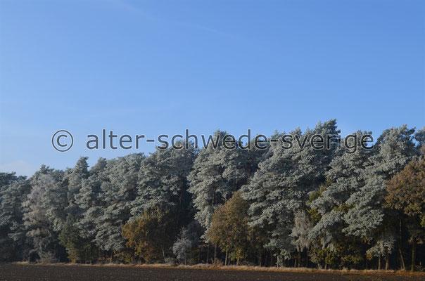 Werden Bäume im Alter auch ganz ... grau ...???