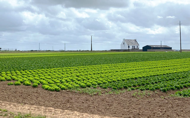 In der Bretagne wird im grossen Stil Gemüse angebaut. Das Pedalen abseits der Küste hat seinen speziellen Reiz.