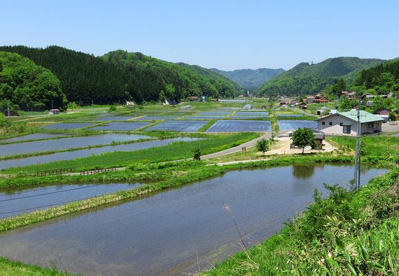 Reisfelder dominieren die Landwirtschaft.
