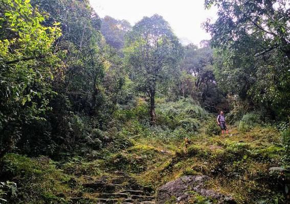 Die Wälder haben etwas Mystisches, das uns sehr gefällt.