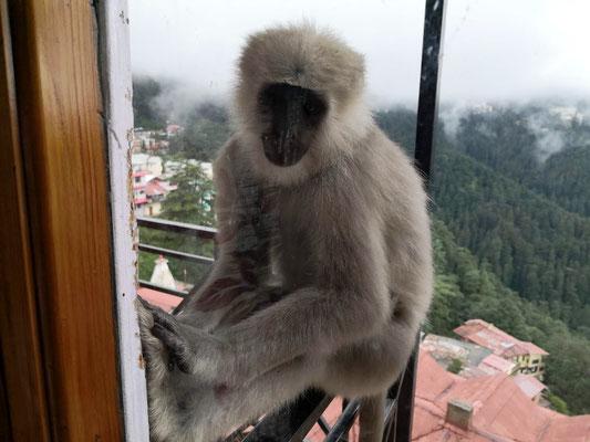 Er macht es sich vor unserem Fenster gemütlich.