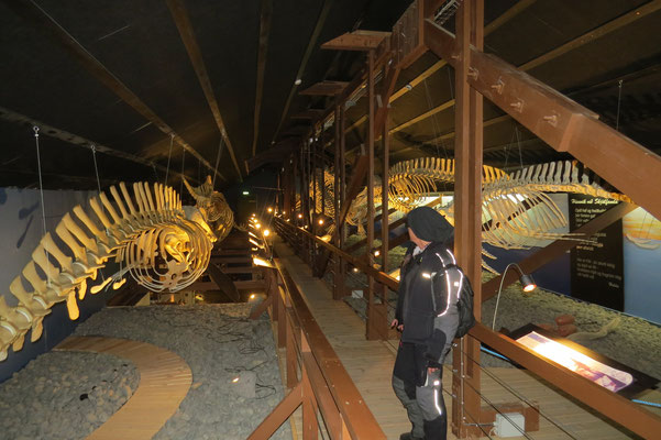 Whale Museum Hùsavik