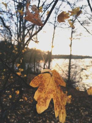 Die letzten Blätter des Herbstes bei einem Sonntagsspaziergang am Wolfssee Duisburg.