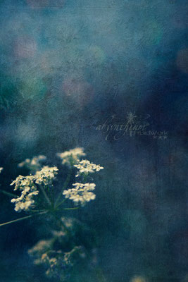 © Stefanie Karbe