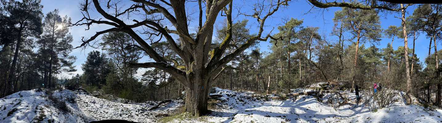 Pano Long Fontainebleau 2