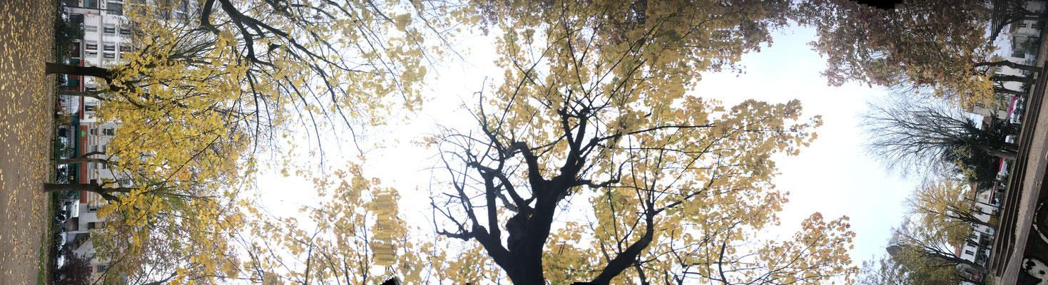 Pano Long arbre 1