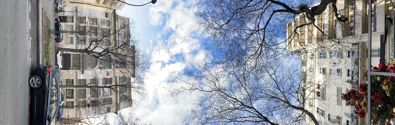 Pano Long arbre 21
