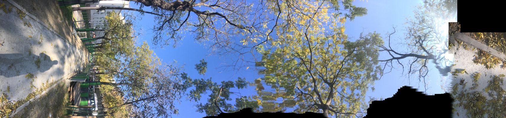 Pano Long arbre 7