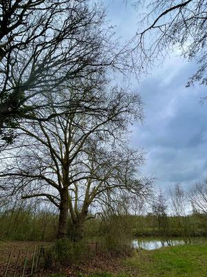 Ces arbres, leurs secrets