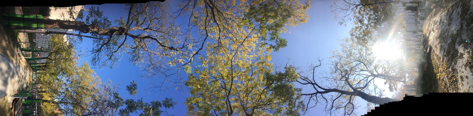 Pano Long arbre 12