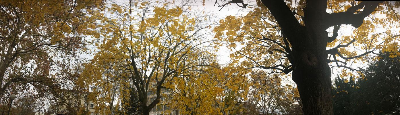 Pano Long arbre 5
