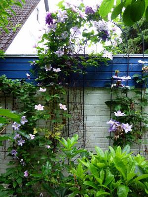 Clematis-Bogen im Nasch-Garten