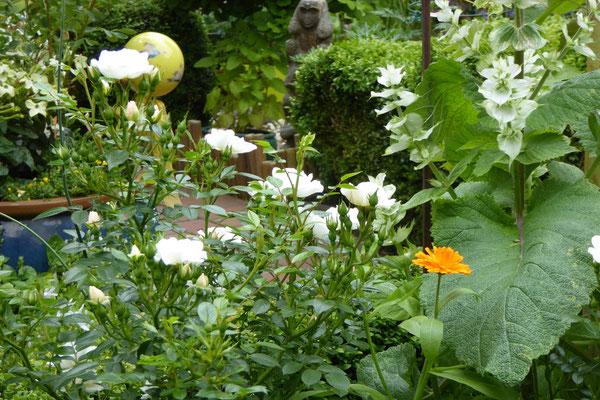Bienenweide Weiß