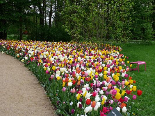 Tulpen-Pracht