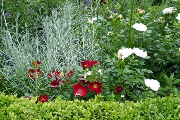 Bienenweide Rot + Weiß