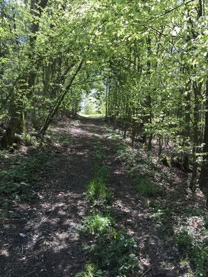 Wanderung im Kalletal