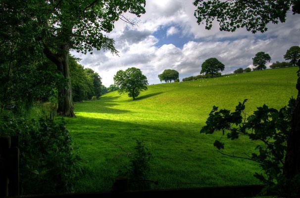 Vert paysage de Normandie ou de Picardie ou de, à vous de choisir !