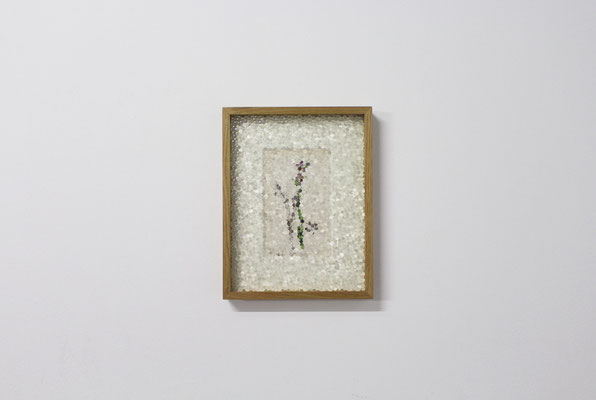 bee orchid, 2019, early 20th-century botany illustration and printed honeycomb glass, 37x29 cm