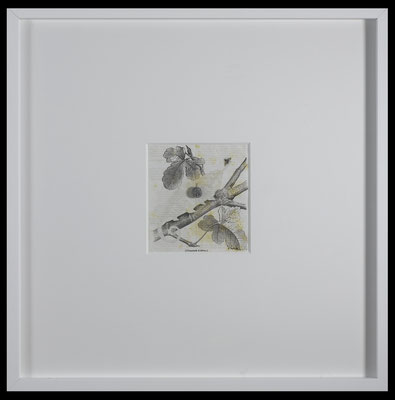 all that has the appearance of powder (chameleon), 2016, early 20th-century zoological illustration scratched, paper powder, illustration 17x17,5 cm, frame 59x59 cm