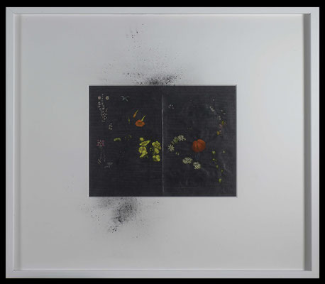 dust, 2016, graphite on early 20th-century entomological illustration, graphite, graphite powder, illustration 32x41,5 cm, frame 73x85 cm