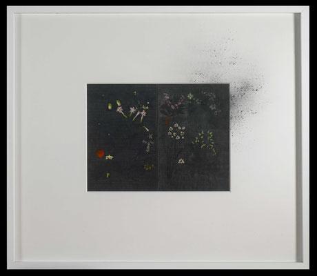 pollen, 2016, graphite on early 20th-century entomological illustration, graphite, graphite powder, illustration 32x41,5 cm, frame 73x85 cm
