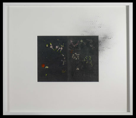 pollen, 2016, graphite on early 20th-century entomological illustration, graphite, graphite powder, illustration 32x41,5 cm, frame 73x85 cm