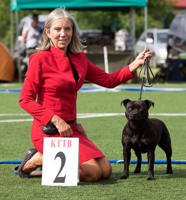 XVI Show Club Terrier type Bull 10.07. 2016 Czosnów ,Judge: Mrs Audrey Hubery (UK), Ch. class - Excellent 2/11, BEST HEAD, BEST MOVEMENT!