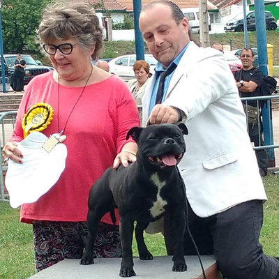 Exc 1º CCJ - Best Junior - BOB - R BOG & BIS Junior!!! CACIB Portugalete 10.07.2016