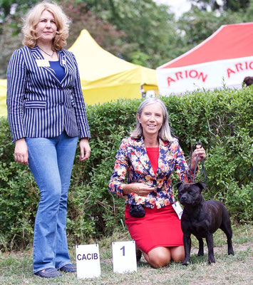 CACIB Warszawa 9.7.2016, Judge: Ramune Kazlauskaite (LT), Exe.1, CAC, CACIB, BOS!!!Qualification for Crufts 2017!!!New Champion of Poland !!!