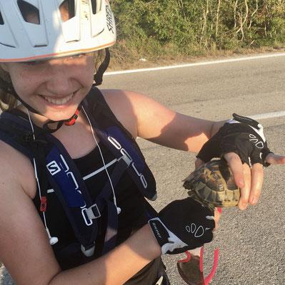 A. hat der Schildkröte zurück in die Wiese geholfen