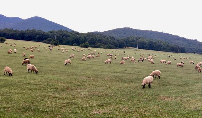 Die Landschaft verändert sich und wir sehen häufiger Schafherden