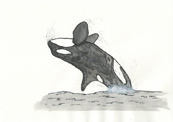 The Grampus - 09/2018 - 21x29,7 cm - Aquarell auf 170g Skizzenpapier