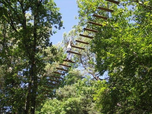 La forêt de Ecureuils